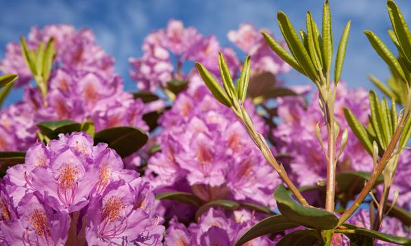 Gartenbau breuer Leistungen: Beratung und Planung