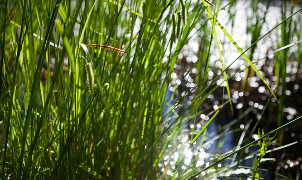 Gartenbau breuer Leistungen: Wasser
