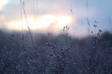 Sonnenaufgang im verscheinten Garten Bild: unsplash - Nicole Harrington