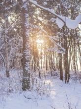 Sonne im Winterwald